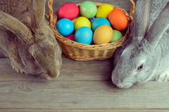 Two Easter bunny Stock Photo