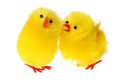 Two Easter Chicken communicating Stock Image