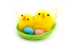 Two easter chicks in a nest Royalty Free Stock Photography