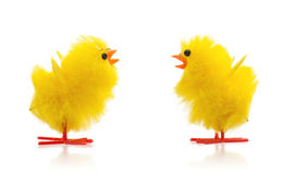 Two easter chicks,  Royalty Free Stock Photos