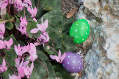 Two Easter eggs near a bunch of Cyclamens Royalty Free Stock Image