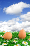 Two eggs with artificial grass Royalty Free Stock Photography
