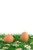 Two eggs with artificial grass Stock Photos