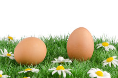 Two eggs with artificial grass Royalty Free Stock Image