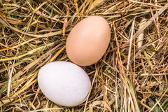 Two eggs in different colors  on a bed of hay. Close up on two eggs in different colors and sizes on a bed of hay Royalty Free Stock Photography