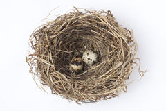 two eggs in a nest Stock Photo
