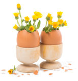 Two eggs in a wooden stands with yellow flowers Royalty Free Stock Images