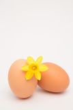 Two eggs and a yellow daffodil and copy space Royalty Free Stock Images
