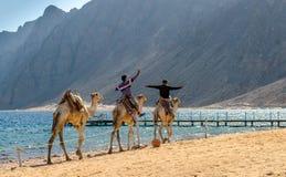 Two egyptian boys riding a camel stock photo