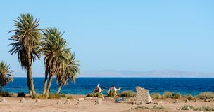 Two Egyptian girls riding camels ride along the coast of the Red Sea stock photo