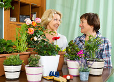 Two elderly housewifes taking care of decorative plants. In pots Stock Image