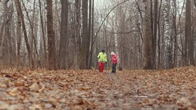 Two elderly woman in autumn park have nordic walking among autumn park stock footage