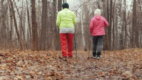 Two elderly woman in autumn park have training - nordic walking - rear view stock video