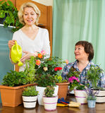 Two elderly women with flowerpots Royalty Free Stock Images