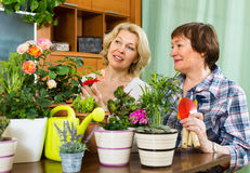 Two elderly women with flowerpots Stock Photos