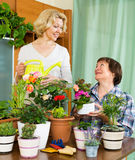 Two elderly women with flowerpots Stock Photos