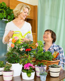 Two elderly women taking care of domestic plants. In pots Stock Photo