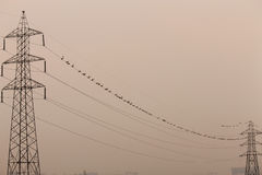 Two electric tower connected by birds Stock Photos