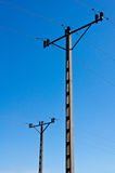 Two electrical poles Stock Image