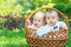 Picnic concept: two little infants sit together in a big wicker basket on grass in sunny day. Spring or summer fun outdoor concept stock image