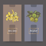 Two elegant labels with ylang and bergamot bouquet color sketch. Royalty Free Stock Image