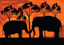 Two elephans. Love between elephant front of tree Royalty Free Stock Images
