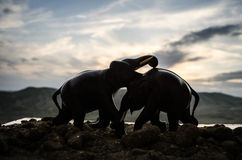 Two elephant bulls interact and communicate while play fighting. Elephants touching each other gently Royalty Free Stock Photos