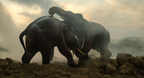Two elephant bulls interact and communicate while play fighting. Elephants touching each other gently Stock Photography