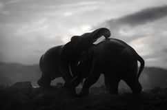 Two elephant bulls interact and communicate while play fighting. Elephants touching each other gently Royalty Free Stock Images