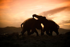 Two elephant bulls interact and communicate while play fighting. Stock Images