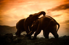 Two elephant bulls interact and communicate while play fighting. Elephants touching each other gently Royalty Free Stock Photo