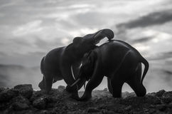 Two elephant bulls interact and communicate while play fighting. Elephants touching each other gently Stock Image