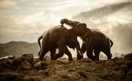 Two elephant bulls interact and communicate while play fighting. Elephants touching each other gently Stock Photo