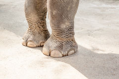 Two elephant legs Stock Photo