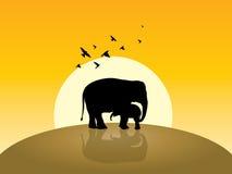 Two elephant, sunrise and flying some birds Royalty Free Stock Photo