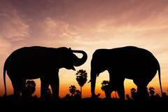 Two elephant on twilight time Royalty Free Stock Photos