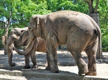 Two elephants Stock Images