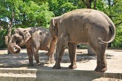 Two elephants Royalty Free Stock Photos