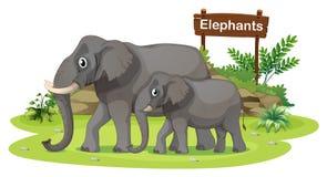 Two elephants near the signboard Stock Photos