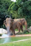 Two elephants Stock Image