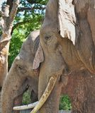 Two elephants profiles Stock Photo