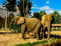 Two elephants throw sand at each other in sunny day.  stock photography