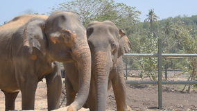 Two elephants at the zoo sprinkles sand itself. Beautiful elephant sprays sand from his trunk. Slow motion Close up stock footage