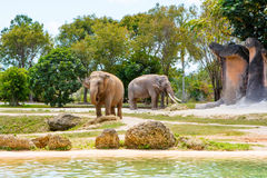 Two elephants in a zoo on warm sunny day Stock Images