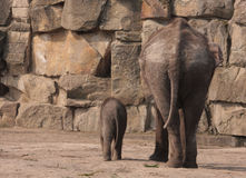 Two elphants from their backside Stock Photos