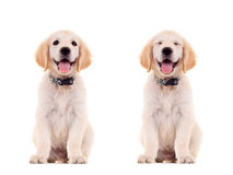 Two emotional poses of a cute puppy Stock Photo