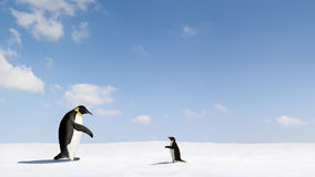 Two Emperor Penguins on snow Royalty Free Stock Image