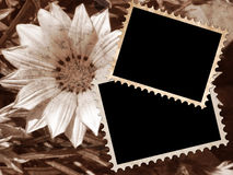 Two empty frames on vintage floral background Royalty Free Stock Images