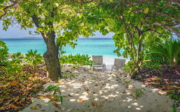 Two empty lounge chairs in the shade of trees on a beach at Maldives resort Royalty Free Stock Photos