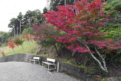 Two empty white benches in a garden with Japanese maple tree during autumn in Kyoto, Japan Royalty Free Stock Photo
